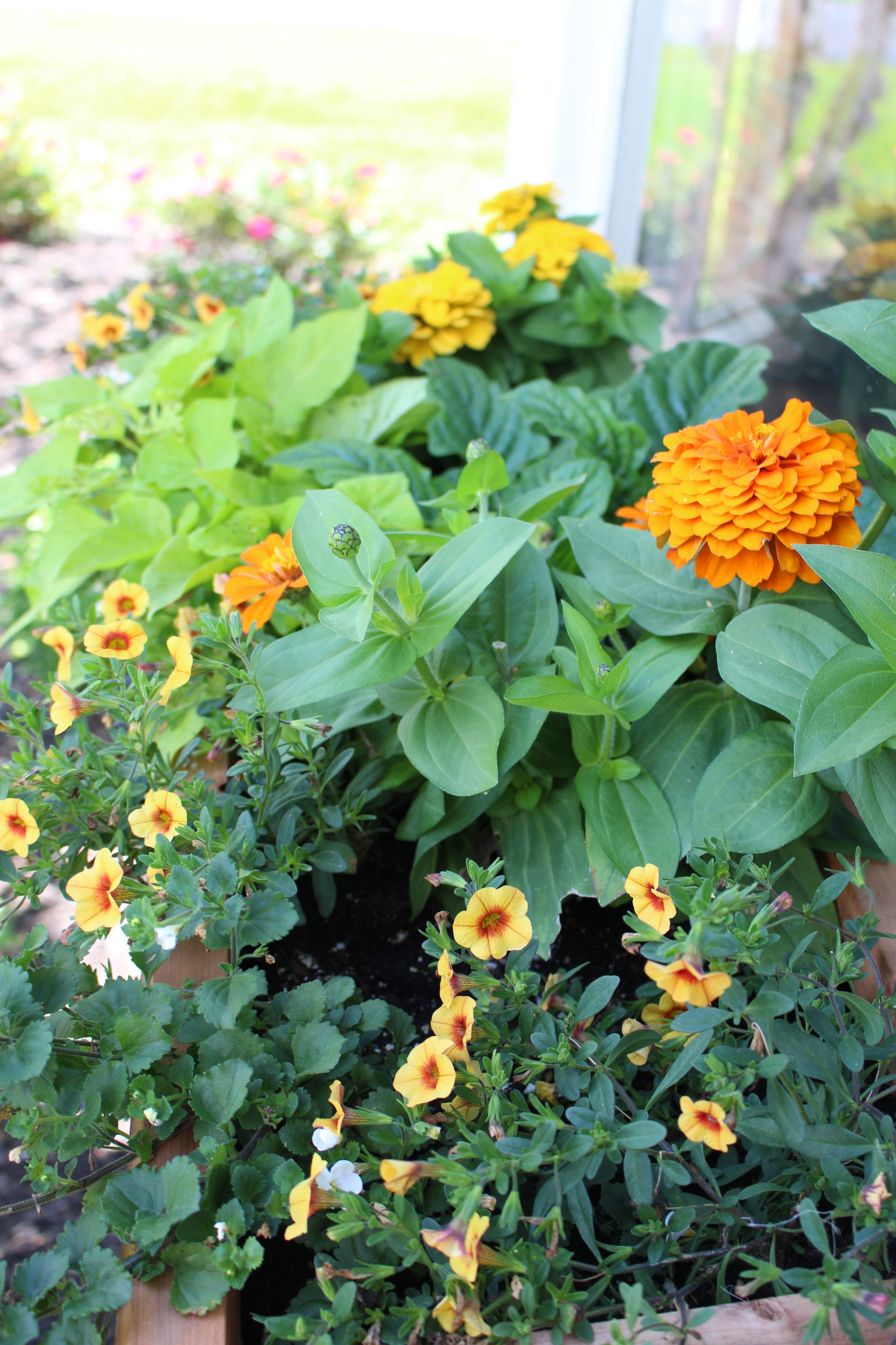 Summer Window Box Plantings for Garden Hop Tour by www.whitecottagehomeandliving.com