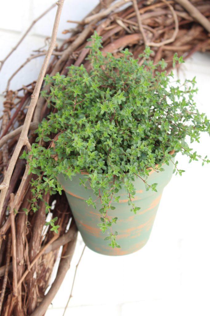 Outdoor succulent garden wreath- living wreath- grapevine wreath- hanging pots- succulents- outdoor- decor-garden- wreath with pots- plants