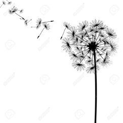 12692207-dandelion-with-seeds-in-the-wind-Stock-Photo