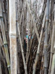 Eve in the bamboo!