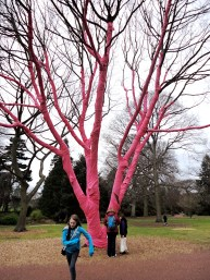 wrapped pink tree, for race for life