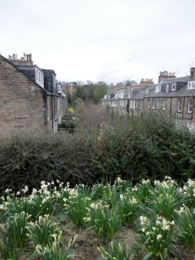 Daffodils and colonies