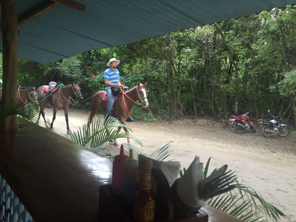 """Parked my bicycle in the """"lot"""" across from the restaurant, where horses were also walking by in front of"""