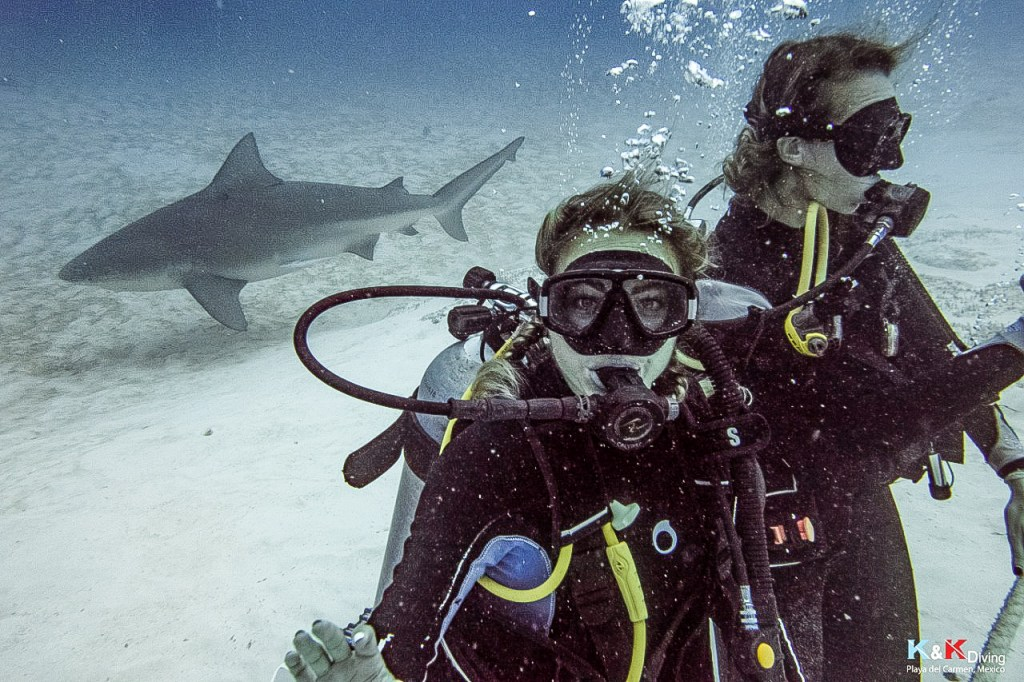 mergulho com tubarão-touro mylifesamovie.com