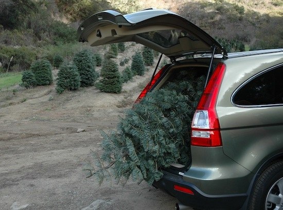 christmas-tree-in-car