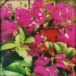 hipstamaticphoto-501978716-521384
