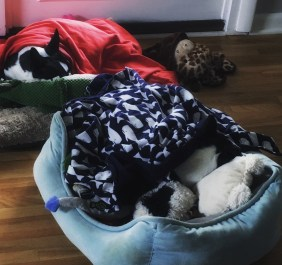 Snuggled in their beds