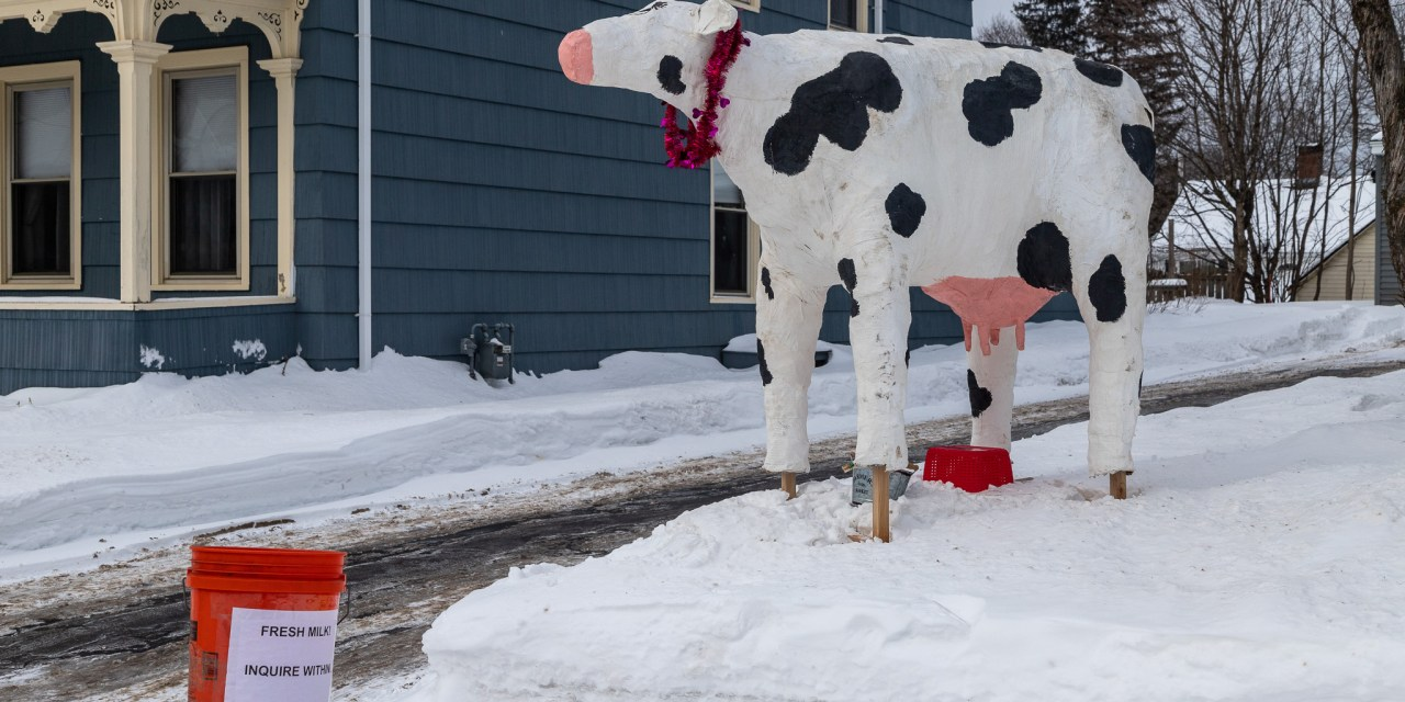 Cold & snow seems to have driven people 'udderly' crazy (updated)