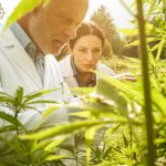 Summary of yesterday's state news – from the Cannabinoid Hemp program to Pool Halls & Weddings