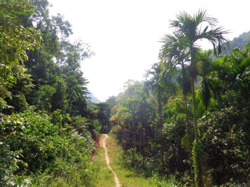 foret sumatra