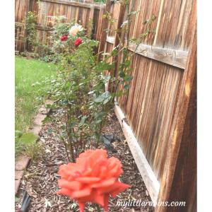 Outdoor Spaces- Rose Garden