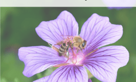 Classic #hymns for #naturestudy. Download a gorgeous free print with hymn lyrics.