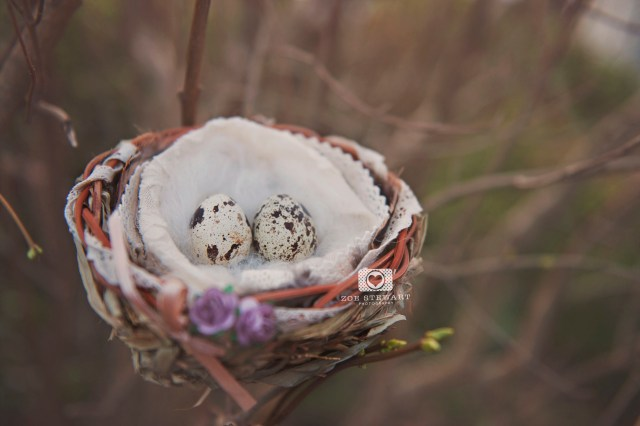nest, eggs, birth, announcement, edinburgh, newborn, photographer, children, lothian, musselburgh, simply, ruby, zoe,