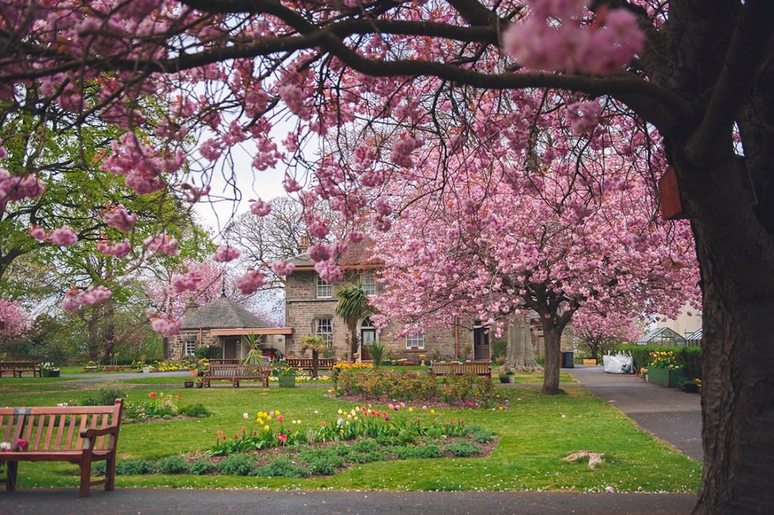 Edinburgh, tips for visiting, Scotland, spring, winter, summer, star bank park, Leith, tourist, 7 hills edinburgh, tours, historic, history tour, Harry Potter, royal mile, instagram tour,