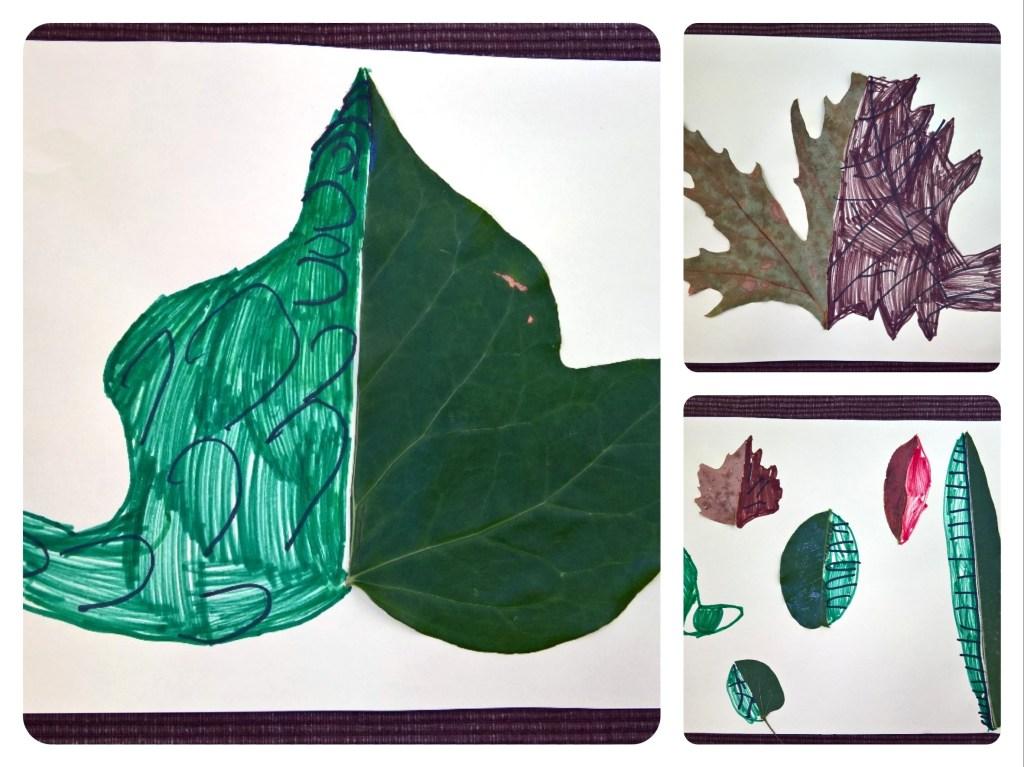 Μελετάμε και ζωγραφίζουμε τα φύλλα