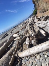 Driftwood and fallen trees are on every beach and make for fun climbing.