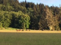 View from our Forks campsite, Last Chance Campground. The wild elk herd.