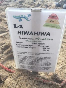 sea turtle info
