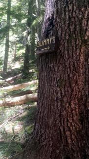 Mt. Ellinore hike on www.mylocalcollaborative.com