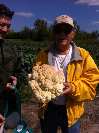 Cauliflower bigger than your head