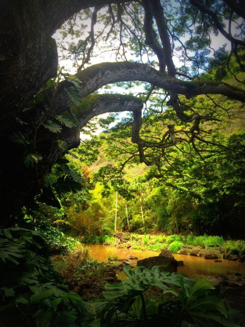 Incredible trees in Hawaii