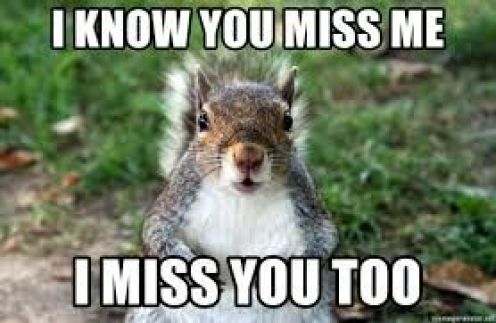 Miss You Too Cat Meme for Her