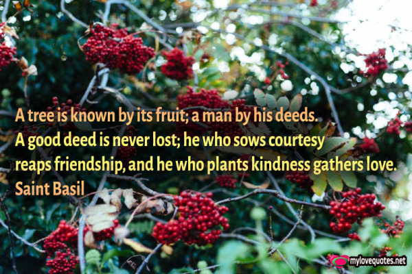 a tree is known by its fruit a man by his deeds