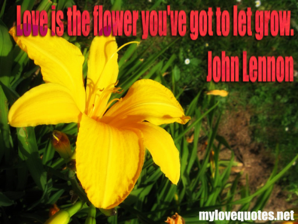 love is the flower you ve got to let grow