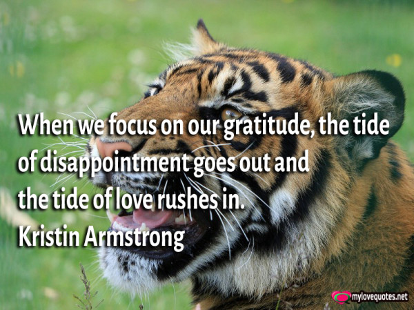 when we focus on our gratitude the tide of disappointment goes out