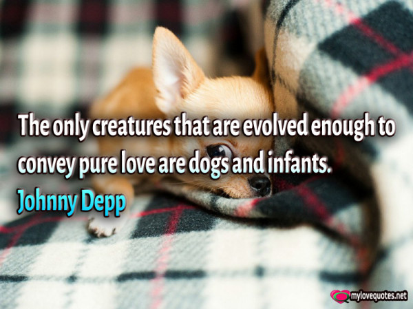 the only creatures that are evolved enough to convey pure love