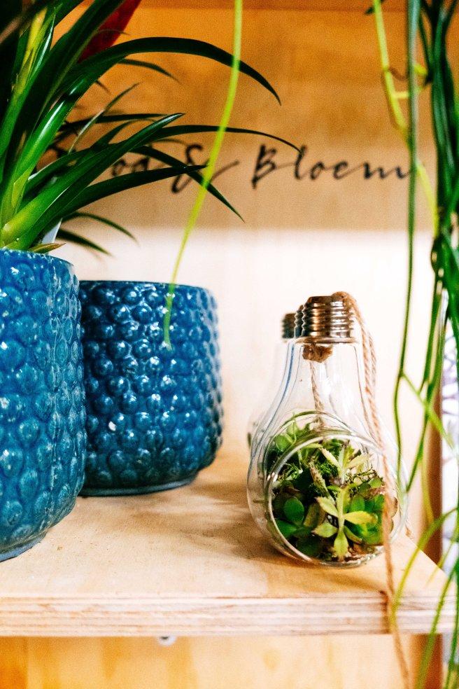 Plantje in lampje