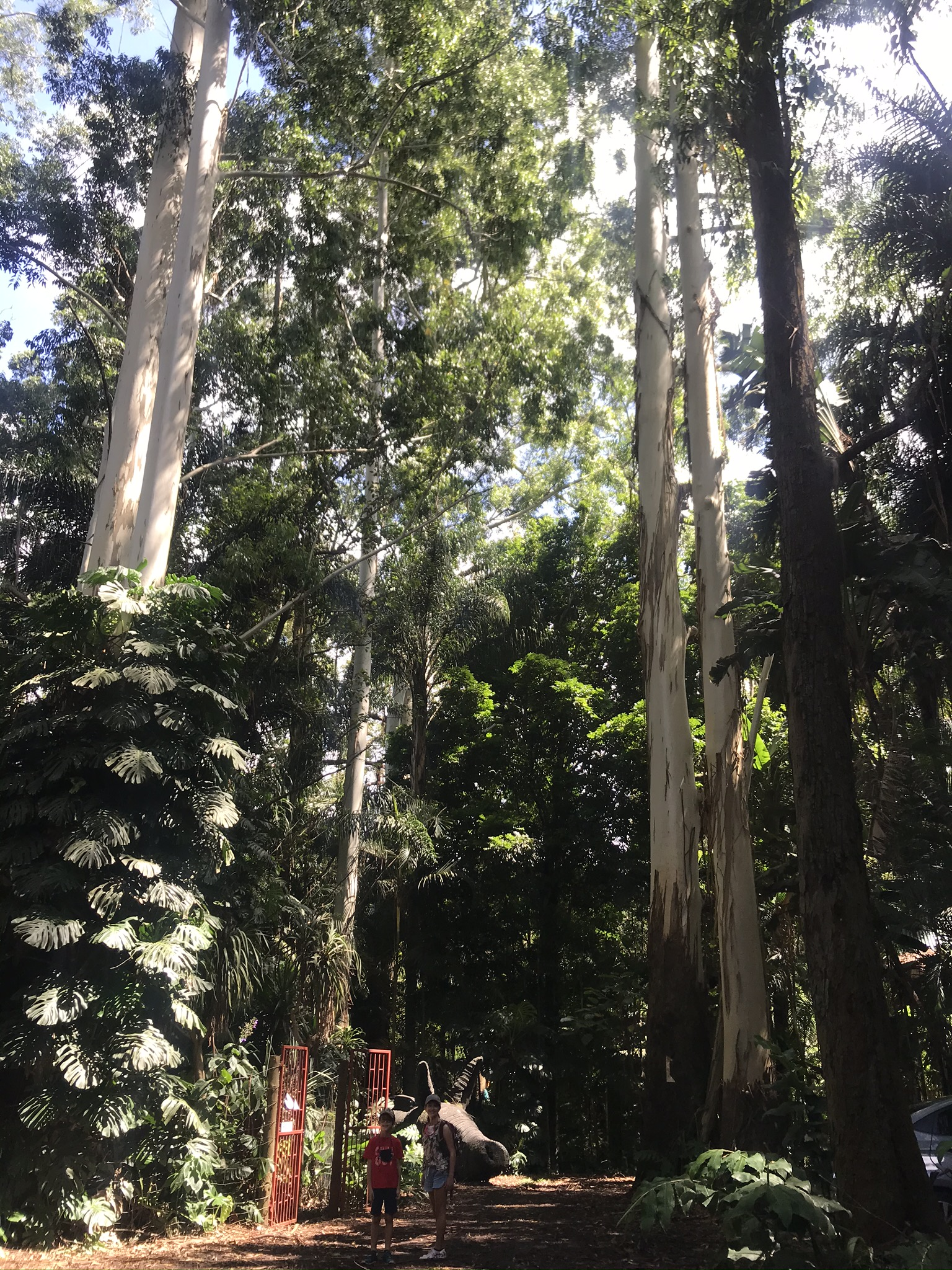 The tall trees at the Ammazulu Gardens and Sculpture Precinct