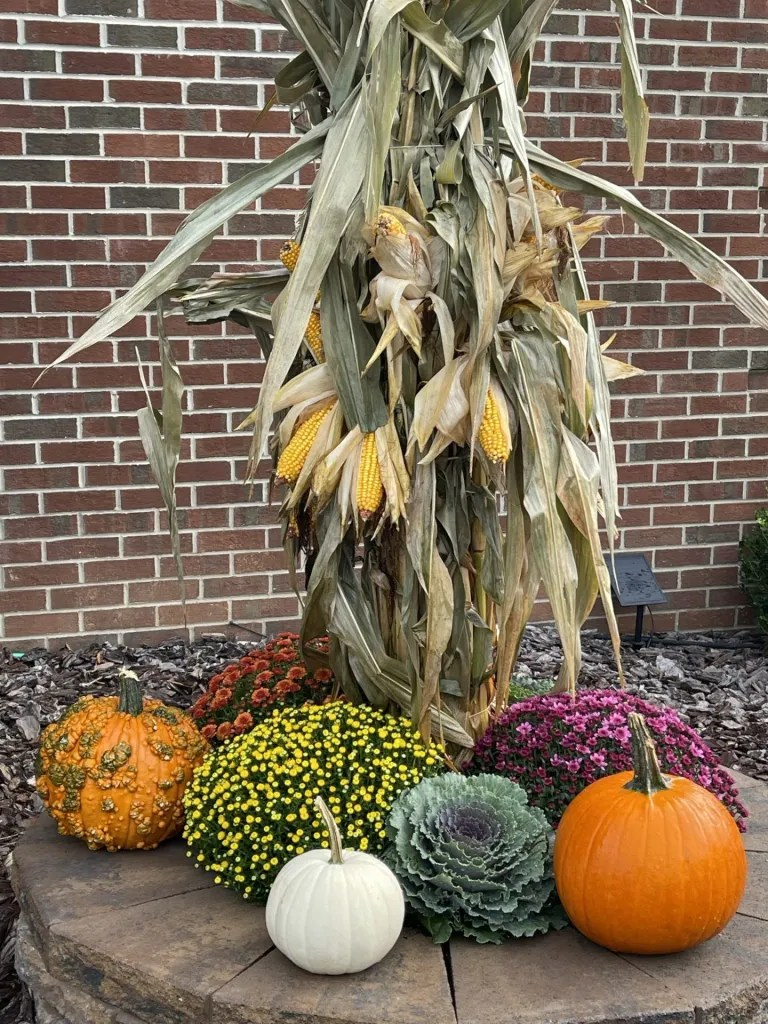 Moving to New Jersey - some of the new sights we see. Pumpkins, Corn and Mums are common decor items celebrating Fall!