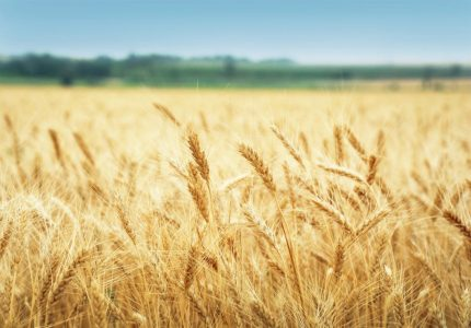 Reaping the Spiritual Harvest