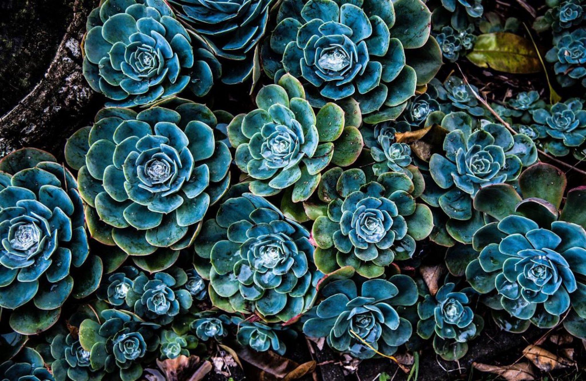 plants fractals patterns