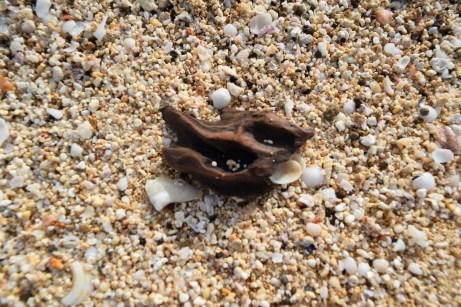 Beached Driftwood & Shells
