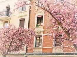 tn_watermarked-cherry blossom 01