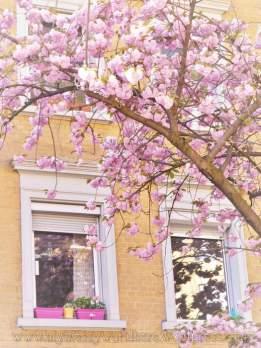 tn_watermarked-cherry blossom 08