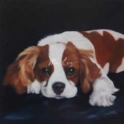 Cavalier King Charles Spaniel by Mia Laing