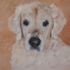 Golden Retriever Pet Portrait by Mia Laing