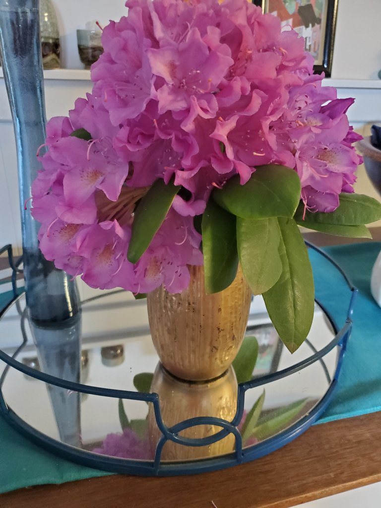 fresh cut rododendron