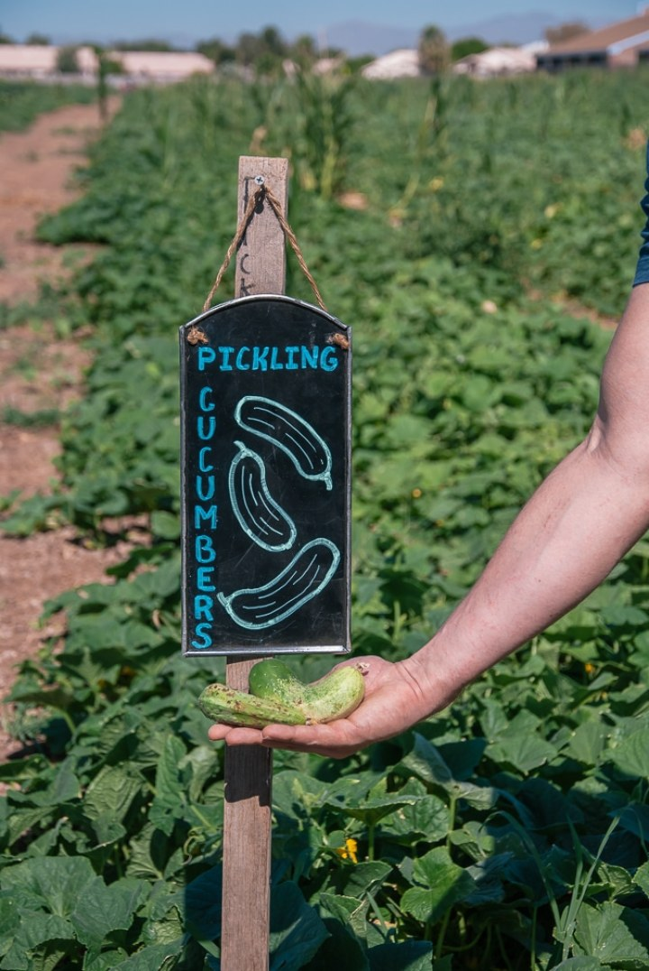 Produce Guide: 50 Summer Fruits and Vegetables You Should Pick This Season
