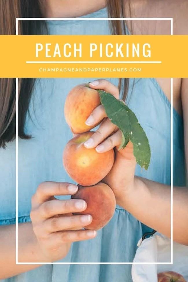 Summer Peach Picking