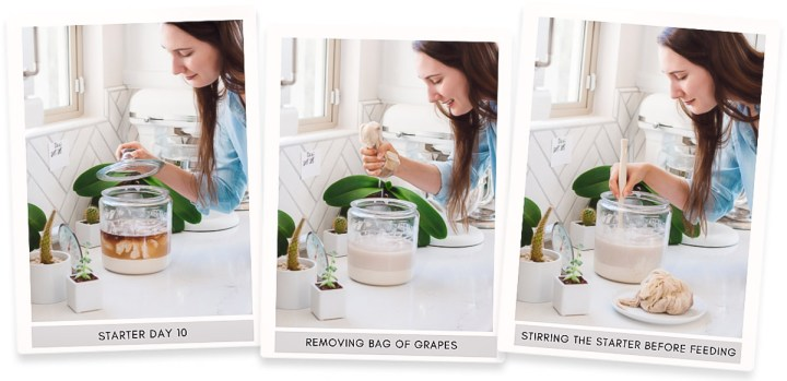 Three image collage of sourdough starter in a glass jar and a woman leaning over the jar and removing the bag of grapes then stirring the starter.