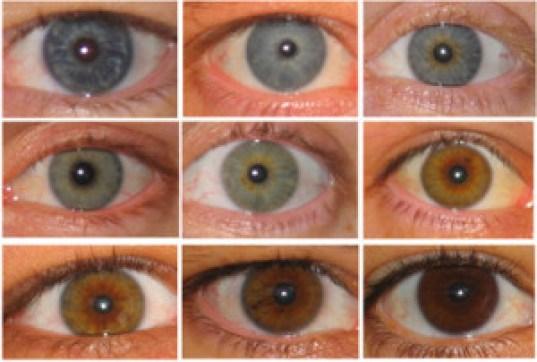 pupil3