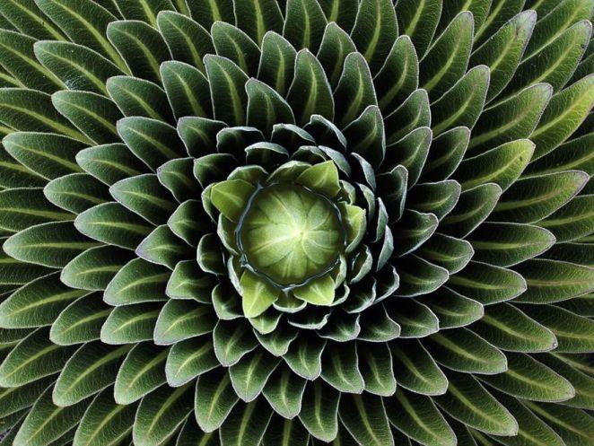 geometria-fyton-4