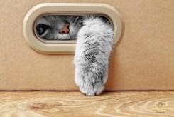 MyMirror - A macskák világnapja_02
