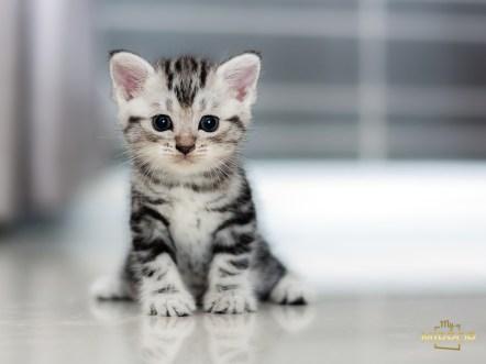 MyMirror - A macskák világnapja_03