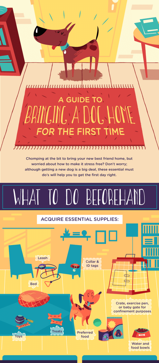 Dog Infographic How to Prepare to bring dog home