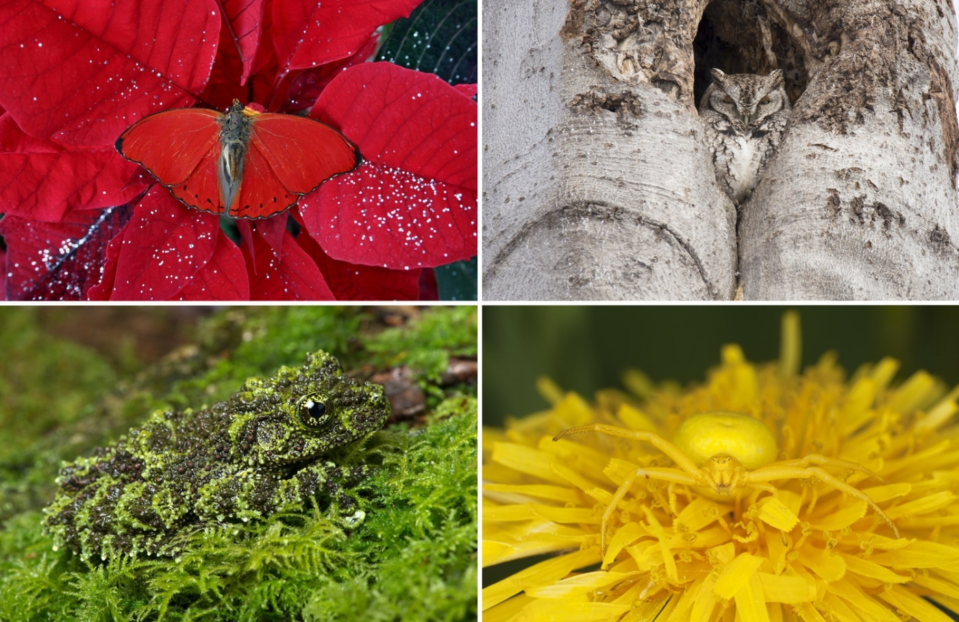 20 Camouflage Animals That You Have To See To Believe